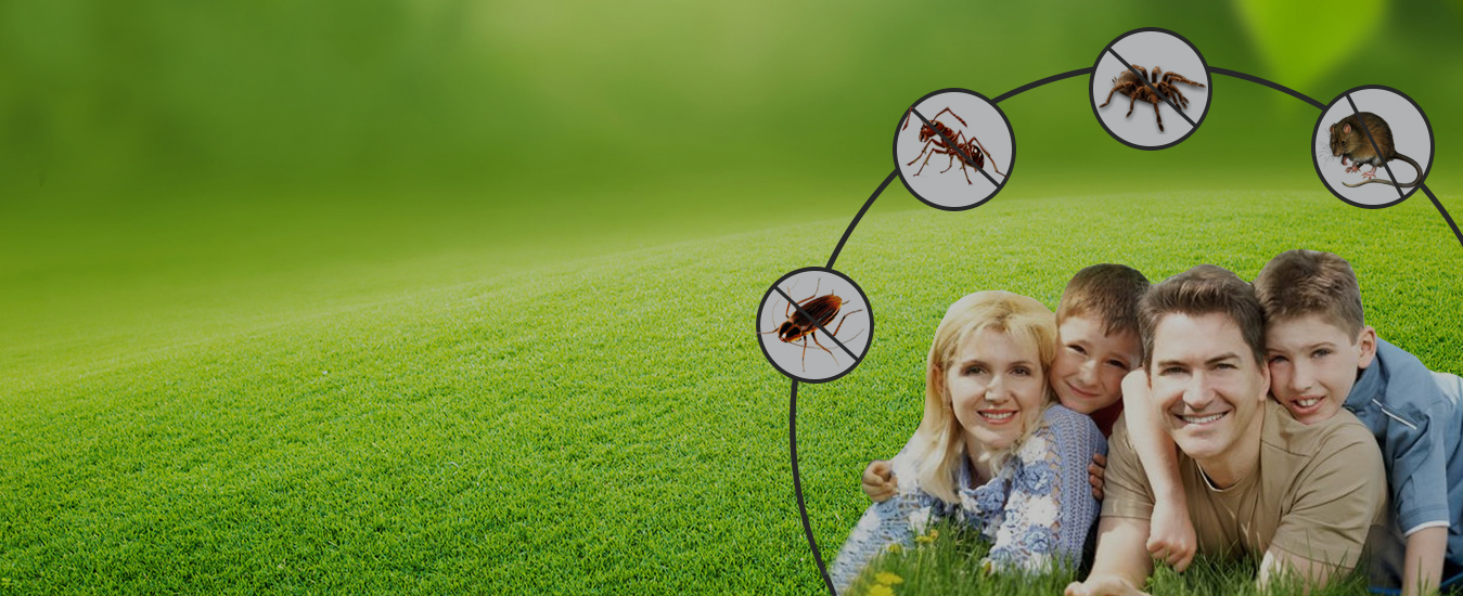 Maple Pest Control