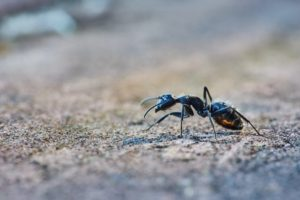 GET RID OF ANTS AND VARIOUS SUMMER PESTS